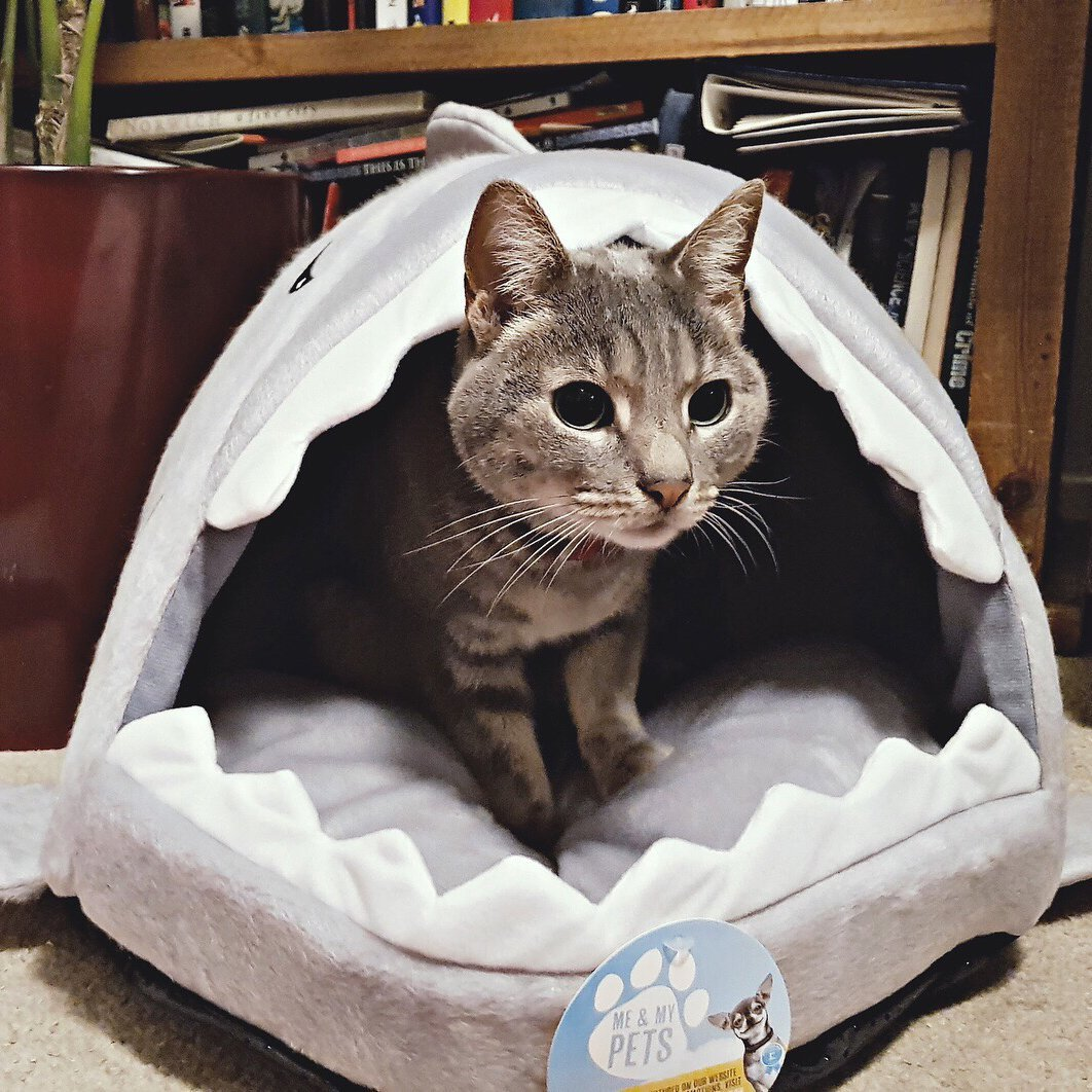 Me & My Pets Shark Bed
